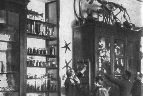 Макаров Степан Осипович в музее